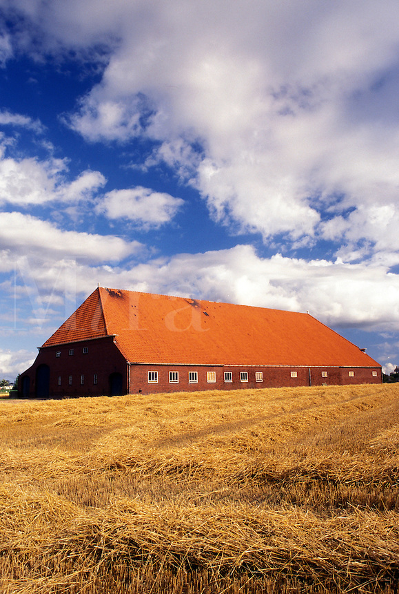 Netherlands, Holland, Groningen, Europe, farm, large barn, wheat field