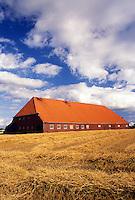 Netherlands, Holland, Groningen, Europe, farm, large barn, wheat field