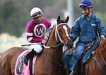 January 14, 2011. Tapizar and Corey Nakatani win the San Fernando Stakes(GII) at Santa Anita Park in Arcadia, CA.