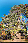 Surrealistic Forest, Taft Point Trail, Fisheye, Yosemite National Park