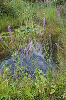 Gartenteich, Teich, Tümpel in einem Naturgarten, Garten, Naturteich, Gardenpond, pond, pool in a natural-garden, garden, natural pond