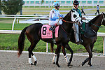 NEW ORLEANS, LA - FEBRUARY 20:<br /> Toms Ready #8, ridden by John R Velazquez in the Risen Star Stakes post parade for the Louisiana Derby Preview Race Day at Fairgrounds Race Course on February 20,2016 in New Orleans, Louisiana. (Photo by Steve Dalmado/Eclipse Sportswire/Getty Images)