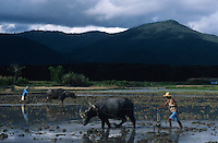 PHILIPPINES Palawan, farmer plough paddy field with water buffalo in front of mountains and cloudy sky / Philippinen Palawan, Landarbeiter pfluegen Reisfeld mit Wasserbueffel vor Bergkulisse mit Gewitter Himmel