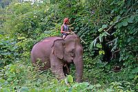 Transporte em elefante. Kalaw. Mianmar. 2007. Foto de Caio Vilela.