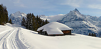 Swiss chalet on the Busalp toboggan slopes - near Grindelwald - Swiss Alps - Switzerland