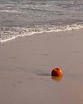 A visitor apparently donated a traditional US thanksgiving pumpkin to the sea.  Rehoboth Beach, Delaware, USA.