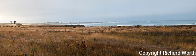 A panoramic image of the coastal terrace prairie at the north end of Ano Nuevo State Reserve with two trees in the distance.