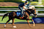 ARCADIA, CA - NOV 03: Om, owned by Sareem Family Trust and trained by Dan L. Hendricks, exercises in preparation for the Breeders' Cup Turf Sprint at Santa Anita Park on November 3, 2016 in Arcadia, California. (Photo by Scott Serio/Eclipse Sportswire/Breeders Cup)