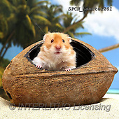 Xavier, ANIMALS, REALISTISCHE TIERE, ANIMALES REALISTICOS, photos+++++,SPCHHAMSTER201,#A#, EVERYDAY ,funny