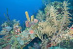 Gardens of the Queen, Cuba; colorful corals, sponges and sea fans growing on the remnants of an old shipwreck