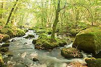 France, Finistère (29), Huelgoat, la forêt, le chaos et la rivière d'Argent sur le chemin du Gouffre // France, Finistère, Huelgoat, the forest and chaos on the Argent River on the path of Gouffre