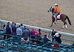 APRIL 30, 2015: Lovely Maria, trained by Larry Jones, exercises in preparation for the 141st Kentucky Oaks during morning workouts at Churchill Downs in Louisville, Kentucky. Ting Shen/ESW/Cal Sport Media