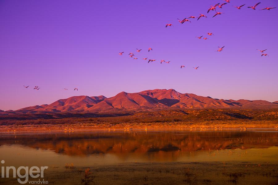 Sunrise reflections at Bosque del Apache, New Mexico