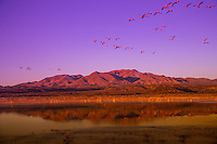 Sunrise reflections at Bosque del Apache, New Mexico
