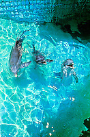 Dolphins playing at Sea Life Park