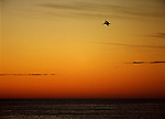 A Pelican flies over the ocean at sunset on the Pacific Coast of Mexico.