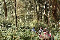 Group of people trekking through Nyungwe National Park, Rwanda
