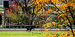 November 1, 2020: Red King, trained by trainer Philip D'Amato, exercises in preparation for the Breeders' Cup Turf at Keeneland Racetrack in Lexington, Kentucky on November 1, 2020. Scott Serio/Eclipse Sportswire/Breeders Cup /CSM