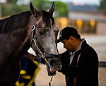 DEL MAR, CA - NOVEMBER 01: Arrogate, owned by Juddmonte Farms, Inc. and trained by Bob Baffert, gets a bath from Jaime Galindo, hot walker for Arrogate, after work outs in preparation for the Breeders' Cup Classic at Del Mar Thoroughbred Club on November 1, 2017 in Del Mar, California. (Photo by Scott Serio/Eclipse Sportswire/Breeders Cup)