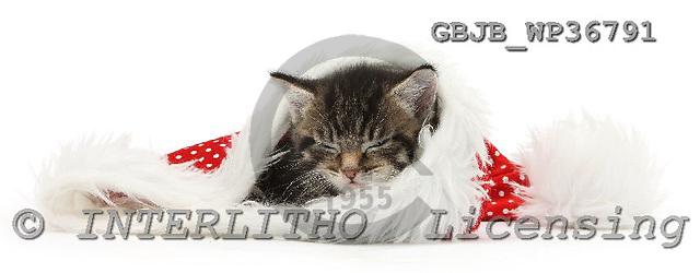 Kim, CHRISTMAS ANIMALS, photos, GBJBWP36791,#XA# stickers