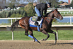 September 19, 2014: Pennsylvania Derby contender Bayern gallops on the Parx track the day before the race at Parx Racing in Bensalem, PA  ©Joan Fairman Kanes/ESW/CSM