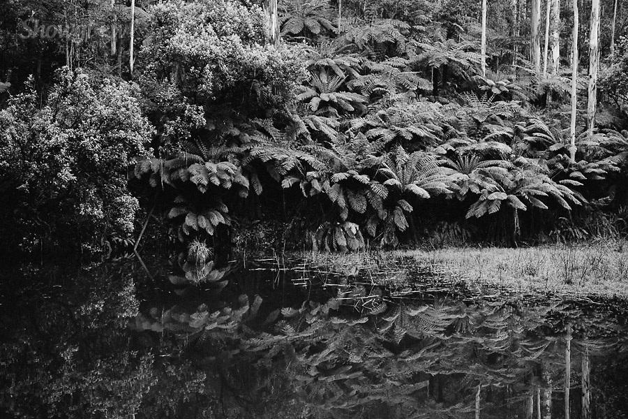 Image Ref: CA580<br /> Location: Lake Elizabeth, Forrest<br /> Date of Shot: 20.10.18