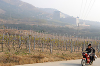 Treaty Port Vineyards which is run by British milllionaire Chris Ruffle in Penglai, Shandong province. 06-Nov-2010