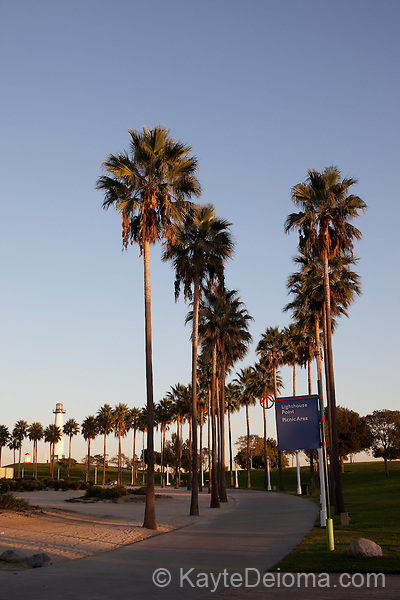 A curving line of palm trees along the path up the the Rainbow Harbor Lighthouse at Lighthouse Point, Long Beach, CA