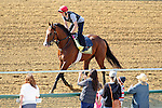 Baltimore, MD- May 17: 137th Preakness contender Zetterholm during morning work outs at Pimlico Race Course in Baltimore, MD on 05/17/12. Trained by Richard Dutrow Jr. (Ryan Lasek/ Eclipse Sportswire)