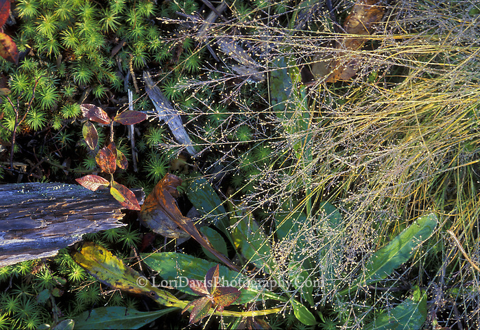 Looking Down at Grasses & Moss