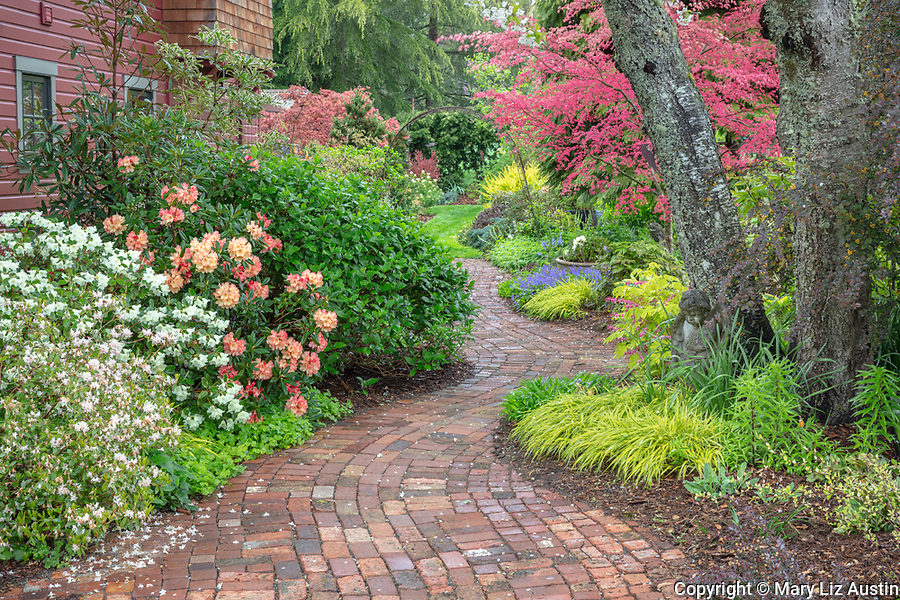 Vashon Island, Washington: Brick pathway leads through spring perennial garden featuring rhododendrons and Japanese Maples.