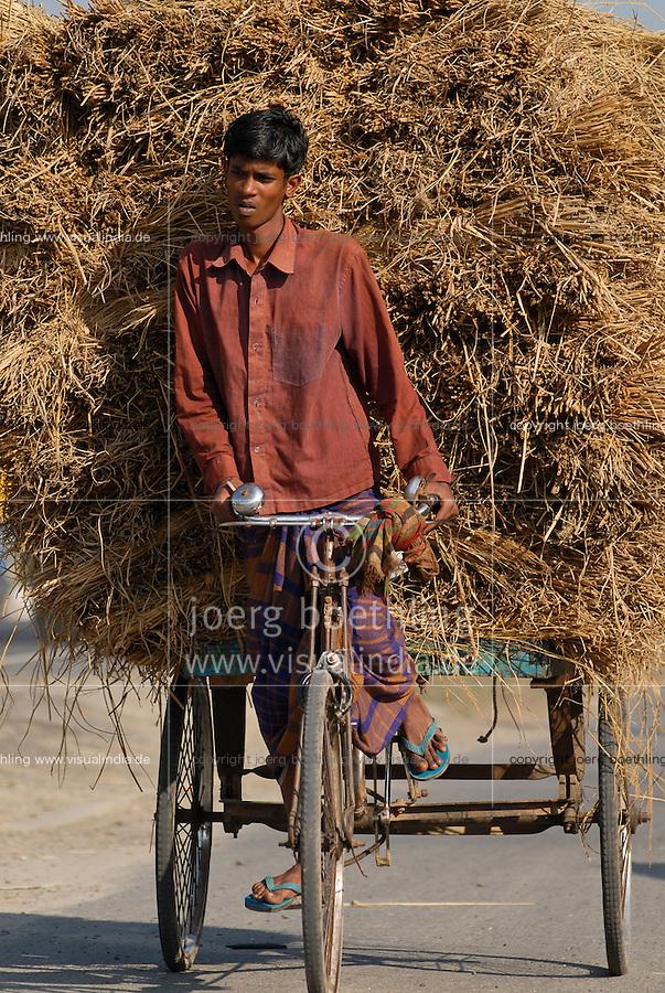 BANGLADESH, Tangail,  transport of rice straw by bicycle rickshaw / BANGLADESCH, Tangail, Transport von Reisstroh mit Fahrradrikscha
