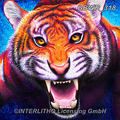 Simon, REALISTIC ANIMALS, REALISTISCHE TIERE, ANIMALES REALISTICOS, innovativ, paintings+++++RachelFroud_Tiger,GBWR318,#a#, EVERYDAY