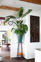 plant on a side table