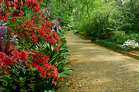 McClay State Gardens in Tallahassee Florida walking trail with blooming azaleas and wisteria