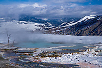 """A fine art landscape of Mammoth Hot Springs in winter, in Yellowstone Park, Wyoming.  Snags on the left speak to the hot water and steam arising from the geysers.  White snow on nearby mountaintops matches the white minerals in the lower geyser terraces.  This image pairs well with """"Mammoth Canary Spring No 1,"""" """"Sun Burst at Mammoth Main Terrace,"""" and """"Snow-swept Pine Near Hot Springs."""""""