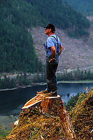 A logger stands atop the trunk of a freshly cut tree. Alaska.