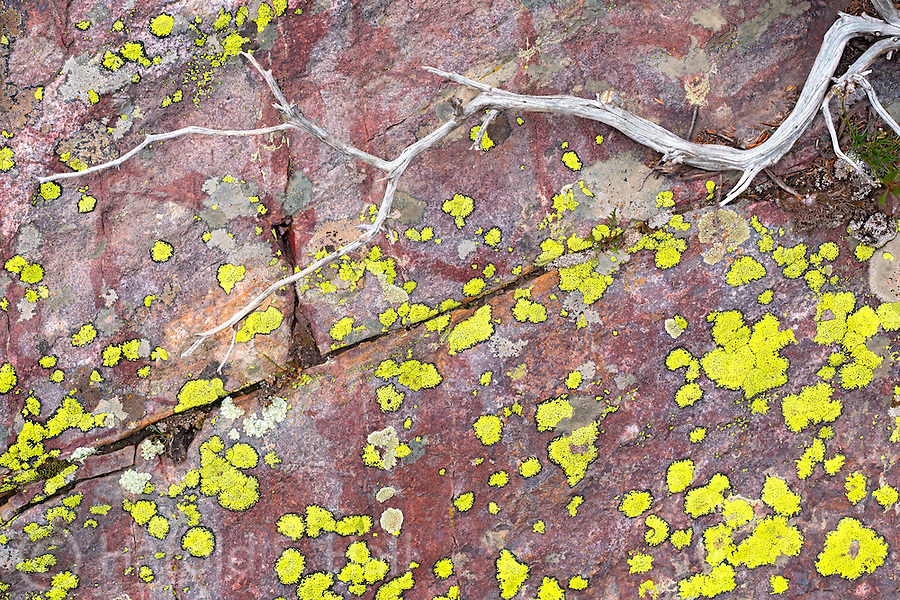 A tree branch laying on an algae covered rock creates an abstract design.