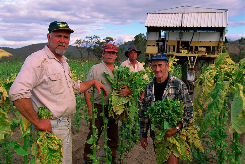 Last Day, (l to r) Portrait, Eddie Toffanello, George Petersen, Gordon Ambrose and Jarvier San Martin Harvesting Tobacco, Toffanello's farm, Dimbulah, 2003.
