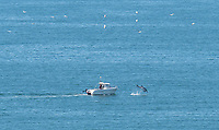 BNPS.co.uk (01202) 558833. <br /> Pic: CarolineWalker/BNPS<br /> <br /> It's behind you....<br /> <br /> A dolphin leaps high out of the sea to entertain a lone fisherman, but the man doesn't even notice the spectacular display behind him.<br /> <br /> The fisherman is seen checking his line and gazing out to sea while the dolphin tries its best to get his attention.<br /> <br /> The dolphin appears to reach heights of about 10 feet, rising above the oblivious fisherman's boat.
