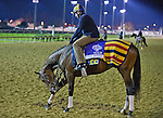 Gio Ponti, trained by Christophe Clement and to be ridden by Ramon Dominguez has an itch and he just needs to get to it before exercising at Churchill Downs November 3, 2011.