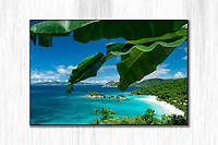 Trunk Bay with banana leaves<br /> St John<br /> Virgin Islands