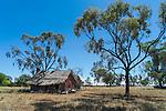 Old farm house in Quirindi countryside, New England, NSW, Australia