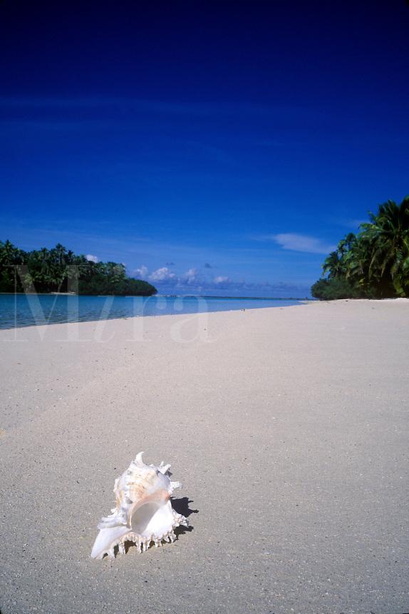 Seashell on a pristine white sand beach.