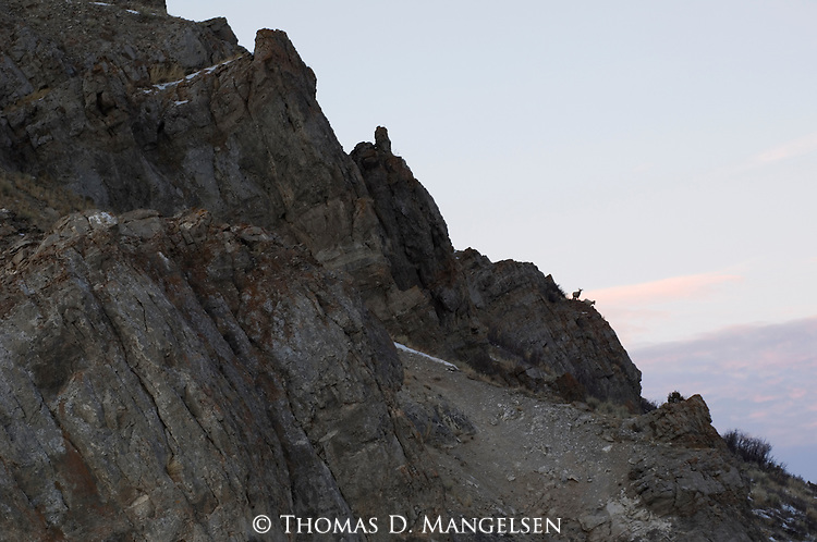 Two bighorn sheep stand on cliffs at sunset in the National Elk Refuge in Jackson Hole, Wyoming.