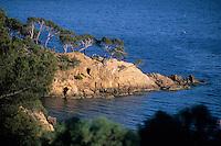 Europe/Provence-Alpes-Côte d'Azur/83/Var/Rayol-Canadel-sur-Mer: Domaine du Rayol - jardin appartenant au conservatoire du littoral - Détail côte rocheuse à la pointe du figuier