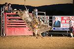 SEBRA - Beverly, WV - 9.5.2014 - Bulls & Action