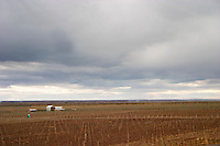 View over the vineyard with dark storm clouds Bodega Familia Schroeder Winery, also called Saurus, Neuquen, Patagonia, Argentina, South America