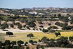 United States of America, California, Santa Barbara County, Near Los Olivos: Santa Ynez Valley vineyards | Vereinigte Staaten von Amerika, Kalifornien, Santa Barbara County, bei Los Olivos: Weinberge im Santa Ynez Valley