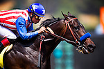 Arcadia CA- April 06: Declassify with Martin Garcia up breaks his maiden at Santa Anita Park in Arcadia, CA on April 6, 2013. (Alex Evers/ Eclipse Sportswire)